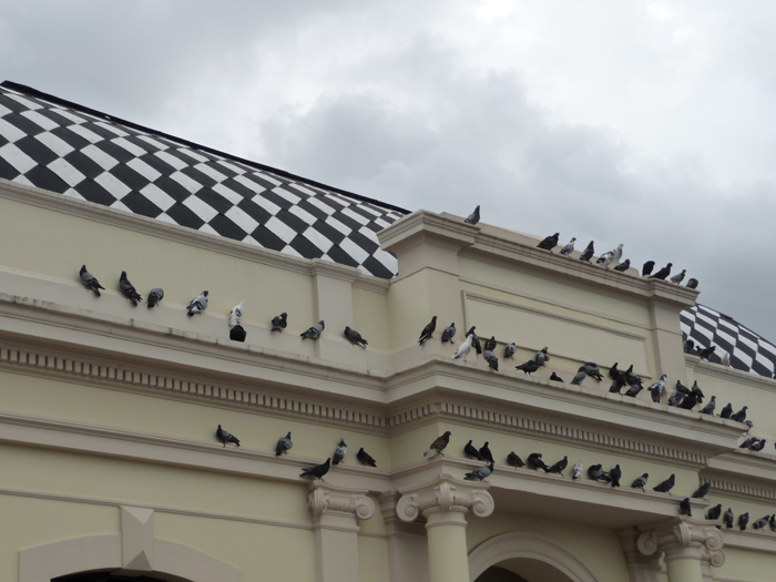 Pigeons on a building ledge - Bird Control Services